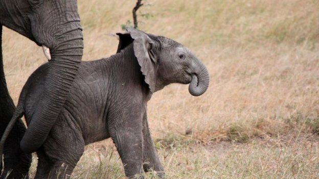 Safari - den afrikanske drøm